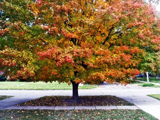 Octobertree