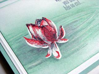 LotusBlossom011815b